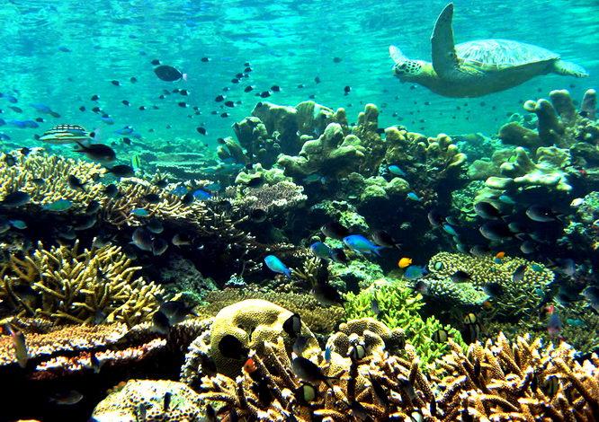 Dykningen på Sipadan är världsklass
