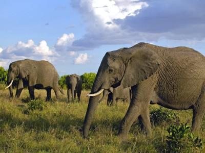 Du kommer nära elefanterna utan att störa hjorden