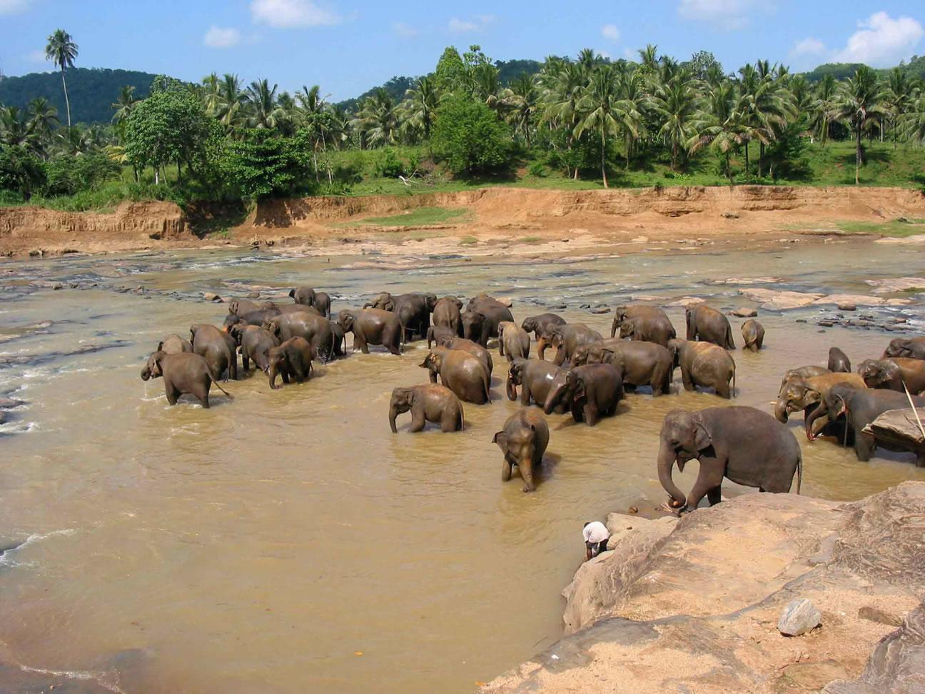 Sri Lanka är värt en resa